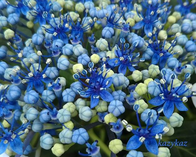 梅雨菓子の花