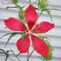 Photos: Hibiscus coccineus