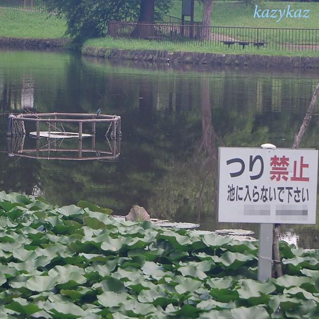 Photos: 釣りカワ