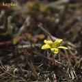 Photos: 輝く春
