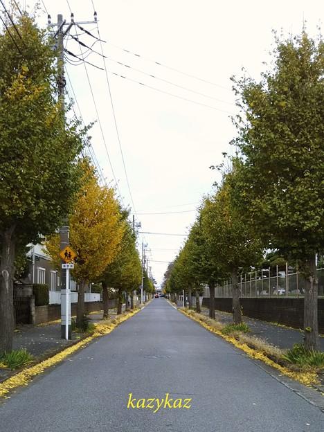 Photos: 銀杏並木<3>
