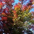 紅葉&青空