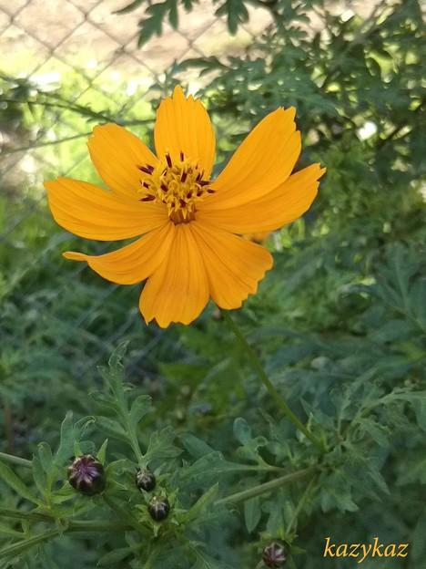 通りすがりの秋の花