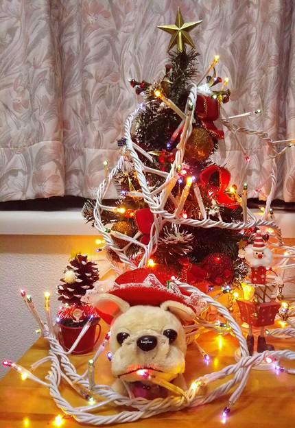 クリスマス始めました!