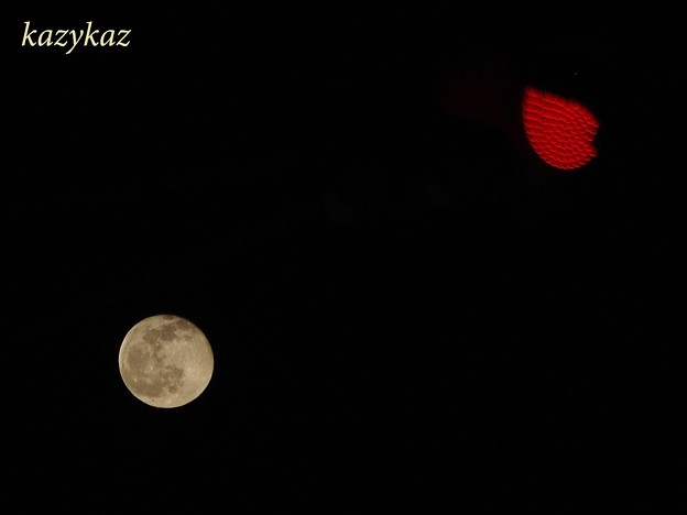 十六夜vs赤信号