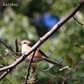 Photos: 冬の百舌鳥