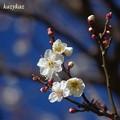 Photos: 咲いてたことは咲いてた
