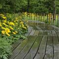 木道の梅雨1