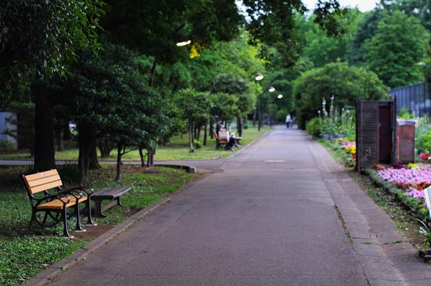街灯を見詰めるベンチ