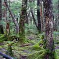 おまけ:北八ヶ岳高原:こだまの森