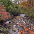 写真: 奥利根水源の森
