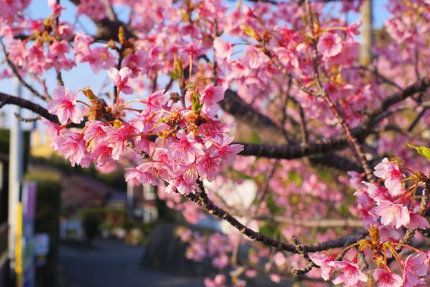道端の春/早春の南房総