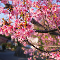 Photos: 道端の春/早春の南房総