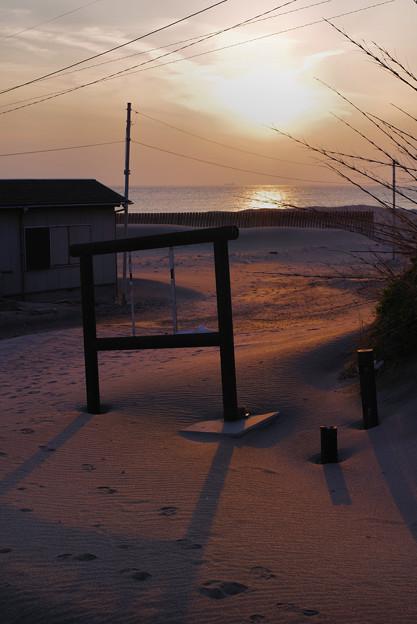 浜の砂漠/早春の南房総