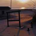 Photos: 浜の砂漠/早春の南房総