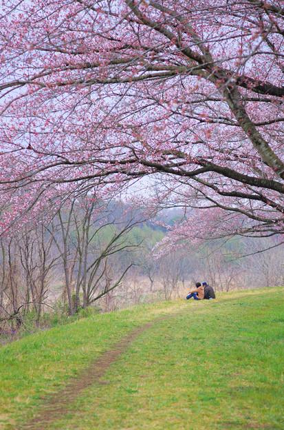 想い出の春