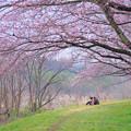Photos: 想い出の春