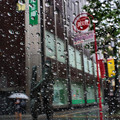 Photos: 雨の唄