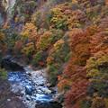 Photos: 老神の秋3