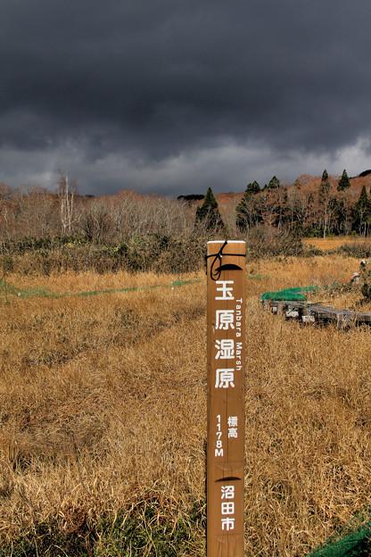 冬枯れの玉原湿原1