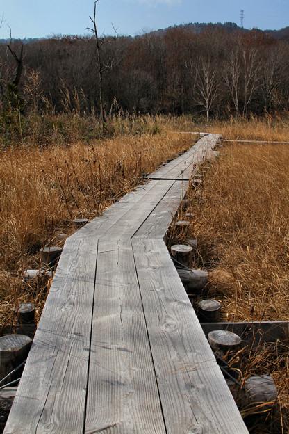 冬枯れの玉原湿原2