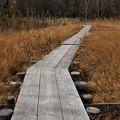 Photos: 冬枯れの玉原湿原2