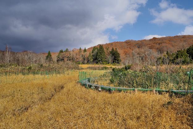 冬枯れの玉原湿原3