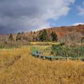 Photos: 冬枯れの玉原湿原3