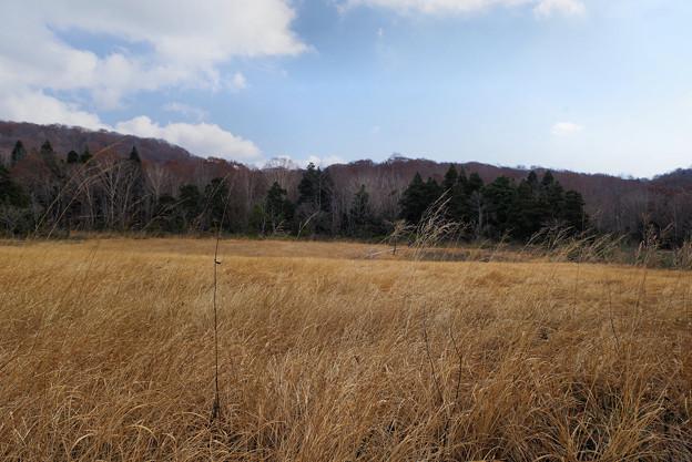 冬枯れの玉原湿原4