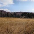 Photos: 冬枯れの玉原湿原4