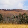 冬枯れの玉原湿原5