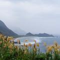 Photos: ススキの丘