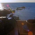 南房総の春:カフェ「岬」にて