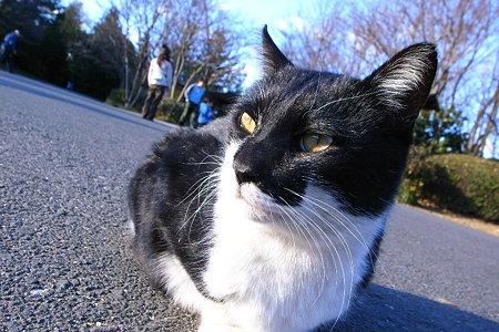 路上の白黒猫