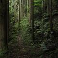 写真: 小滝への途中