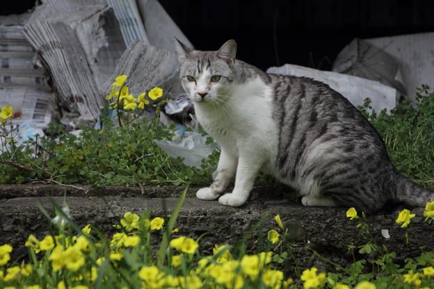 野良猫の春