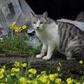 写真: 野良猫の春