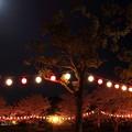 夜桜・・花見ちょうちん