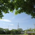 写真: もみじの新緑と青空
