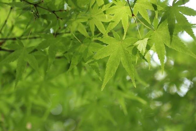 写真: 春は新緑