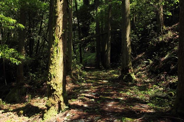 写真: 小滝への山道