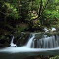 写真: 箱滝の下流の流れ