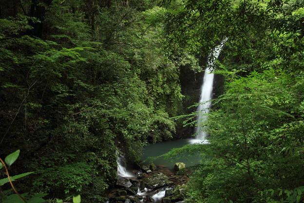写真: 小滝・・年々覆いかぶさる