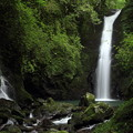 写真: 小滝・・近くに行くでも苔で滑ります