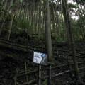 大滝への登り口