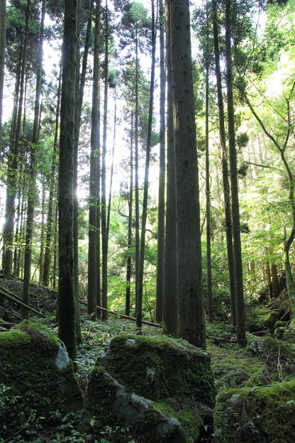 小滝からみる森