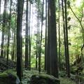 写真: 小滝からみる森