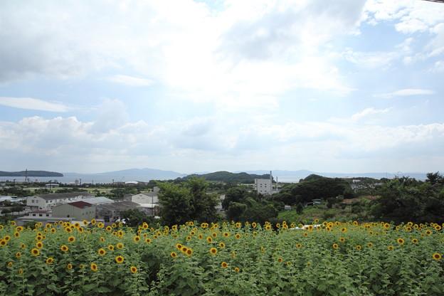 ひまわり・・水俣汐見町