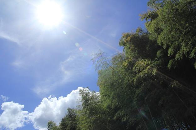 暑い夏の陽射し