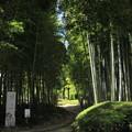 Photos: 竹林園裏側入口